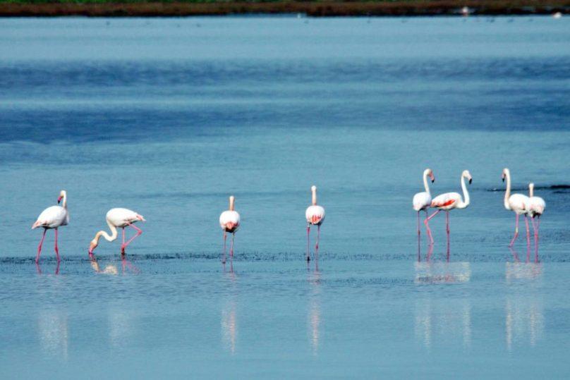 Masainas: Il sud Sardegna a misura di famiglia tra mare, sport, natura e buon cibo.