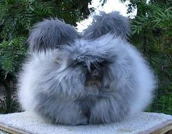 rabbits.jpg