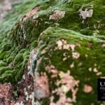 {day 311 project365 2015… green velvet coverings}