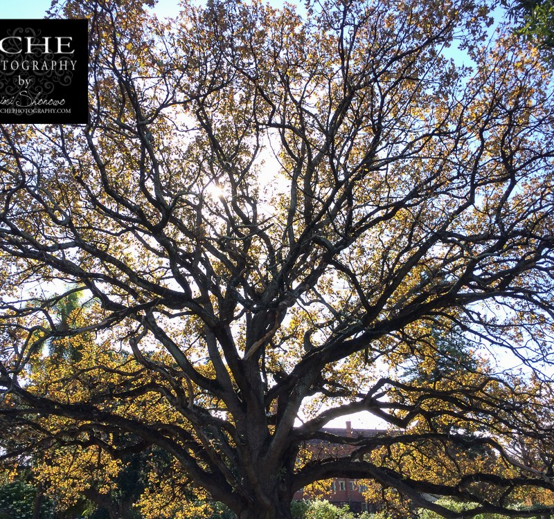 {day 166 mobile365 2016… st george's tree cover}