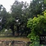 {day 228 mobile365 2016… rainy day hacienda}
