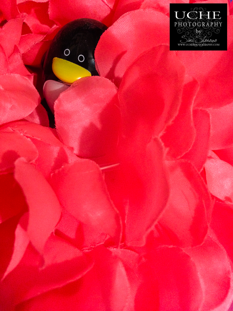 {day 347 mobile365 2016 penguin in lei}