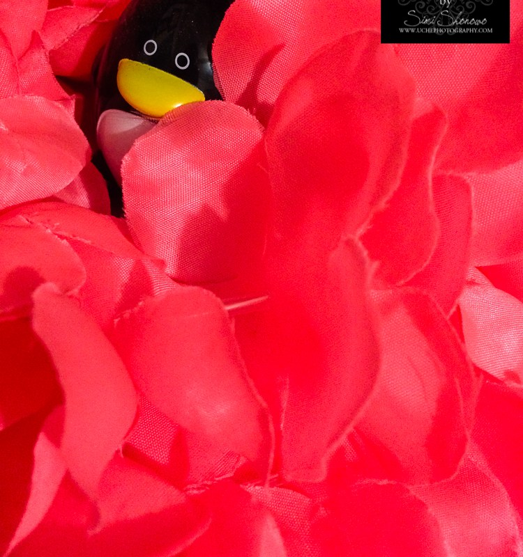 {day 347 mobile365 2016 penguin in lei}
