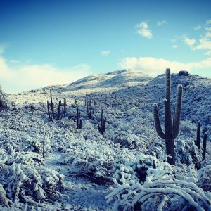 A rare snowstorm in the Sonoran desert: Saguaro National Park East.