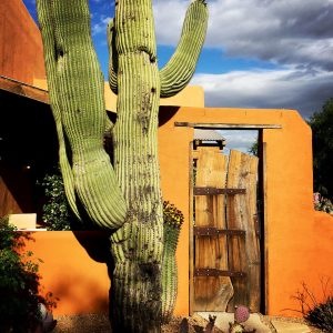 Custom gate and aged saguaro.