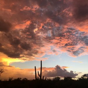 Sunset at Saguaro National Park East. Not too shabby.