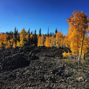 Autumn aspen growing among black lava east of Cedar Breaks National Monument.