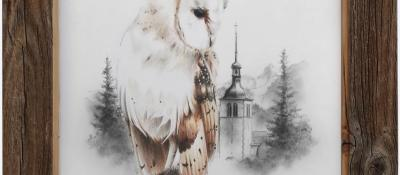 Effraie des clochers <br/> 30 x 40 cm <br/> Crayons couleurs et gris sur fond blanc