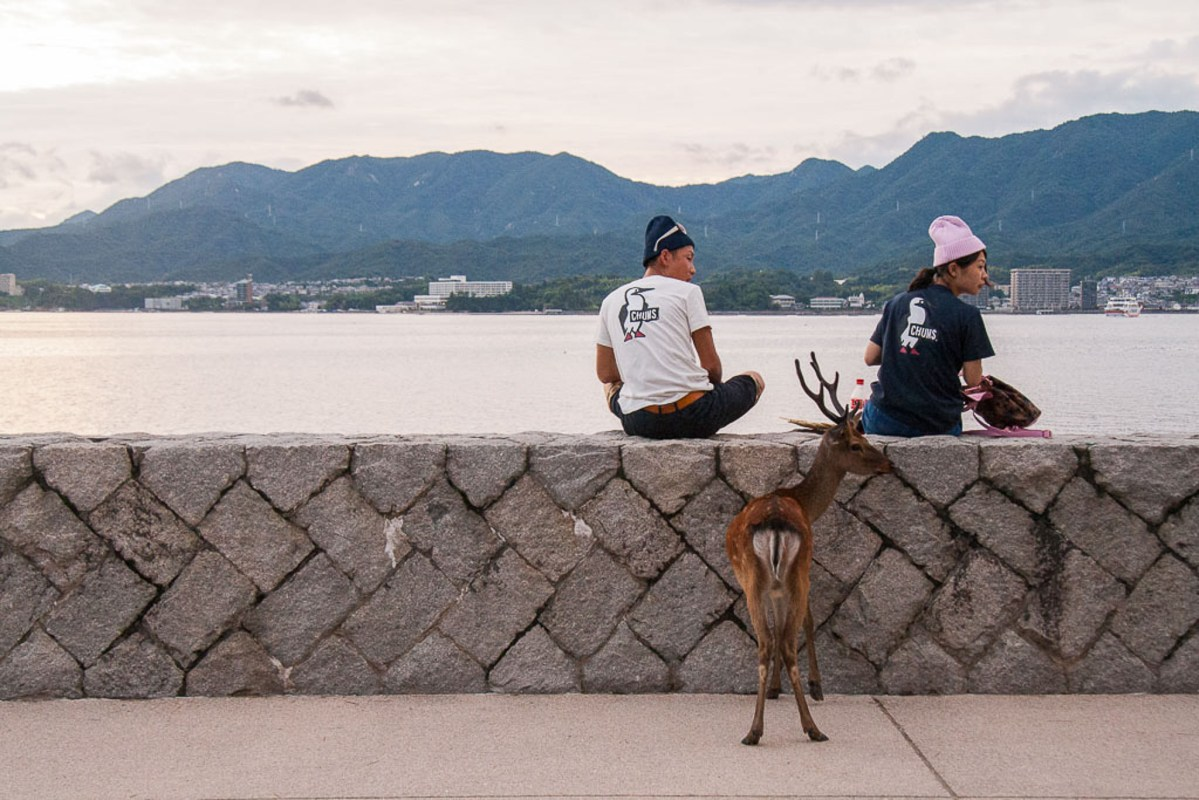 The Sacred, Starving Deer of Miyajima