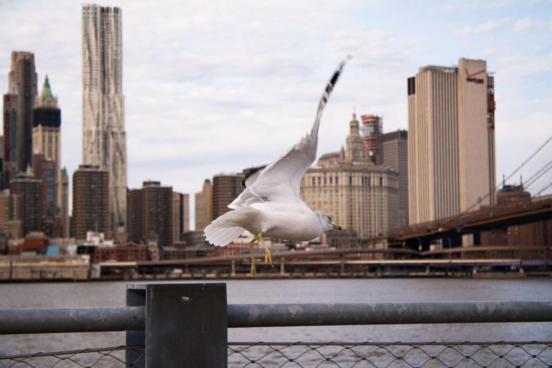NYC '15 380