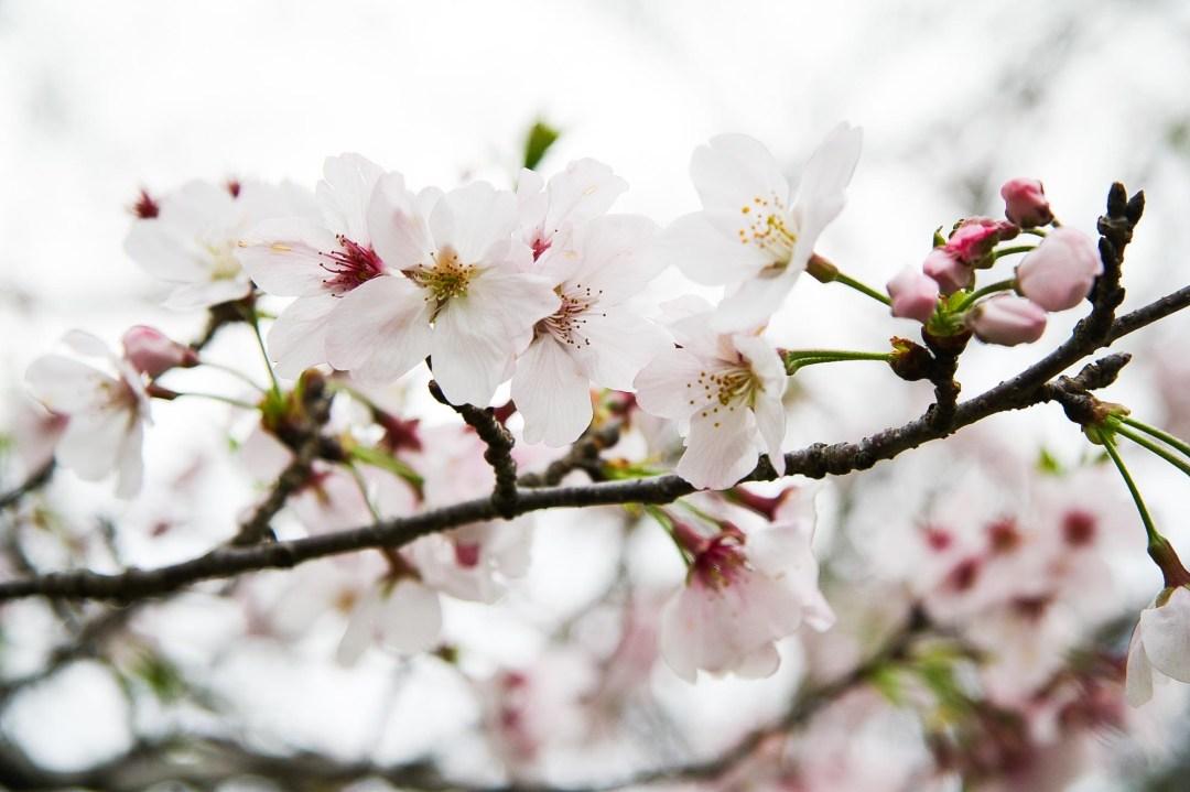 Spring 076