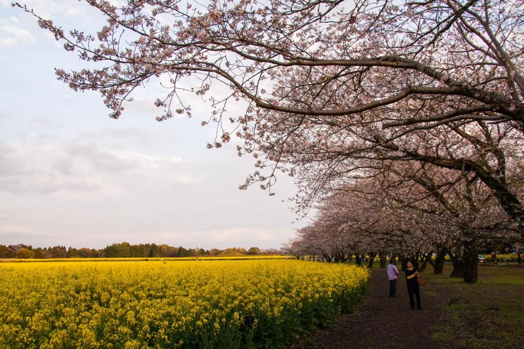 Toshiyuki Kuroki Garden 107