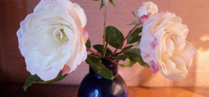roses décembre