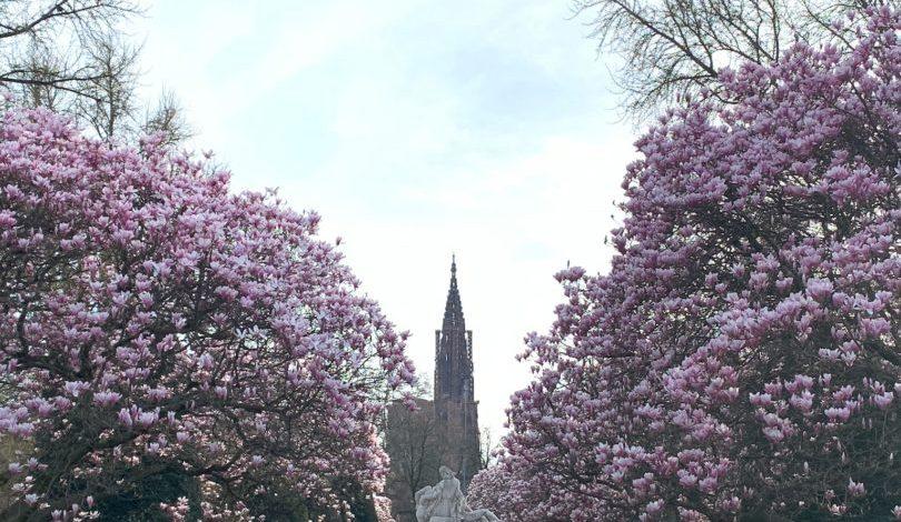 magnolias place répuplique