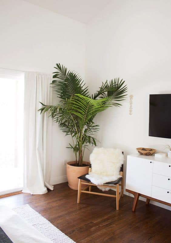1 Set Some Green Plants Via Simphome com