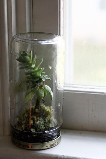 jar jam terrarium