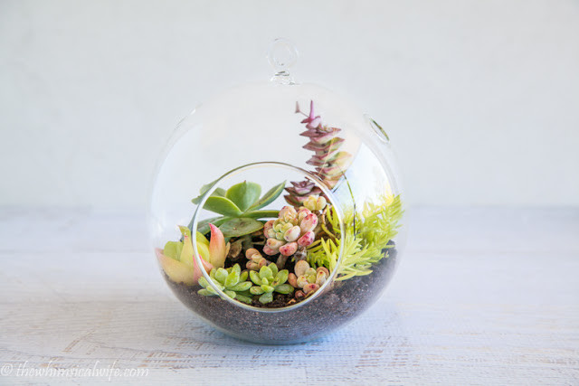 unique succulent