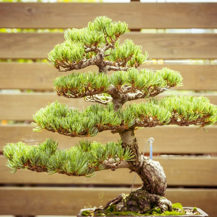 4. Add Bonsai via SIMPHOME.COM