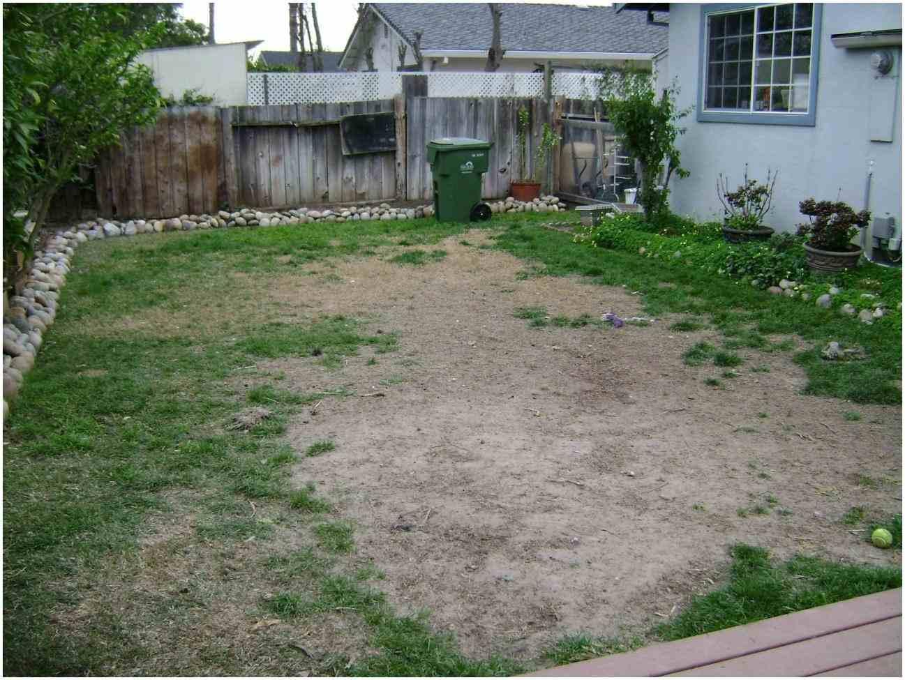improve dog backyard landscape