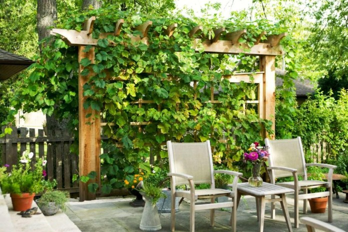 5.SIMPHOME.COM 10 Ideas how to make backyard privacy landscaping Plant Covered Trellis