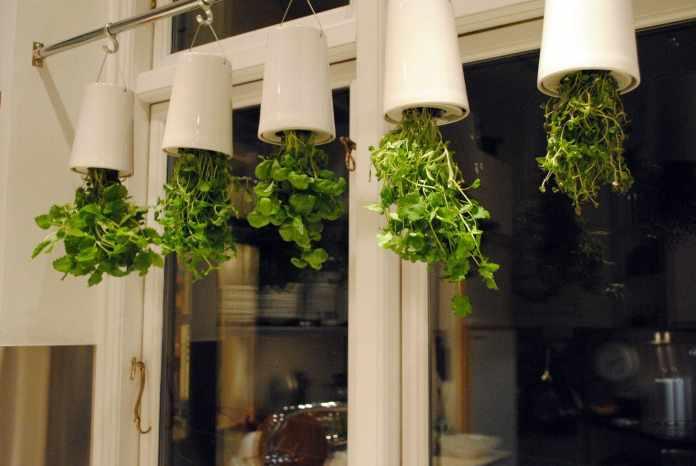 1.Simphome.com Fun Herb Garden