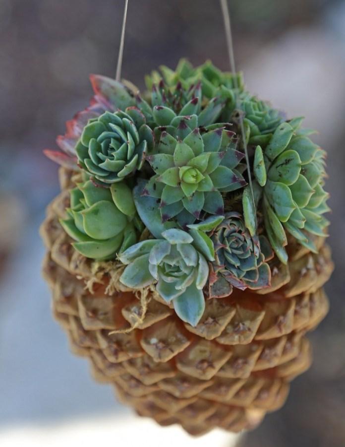 5.Simphome.com Pine Cone Succulent