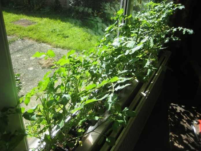 8.Simphome.com Windowsill Gardening project ideas