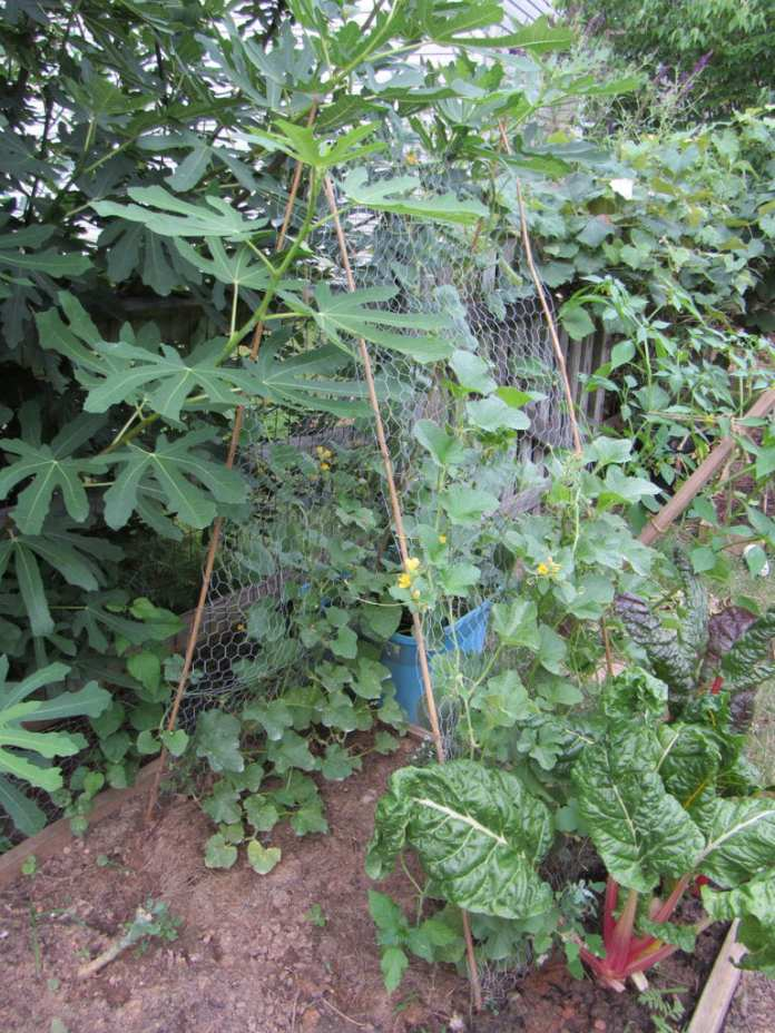 Simphome.com how to build a low cost vegetable garden trellis 5 steps for 2020 2021 2022