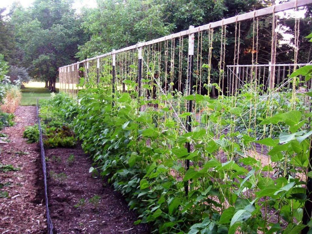 10 Vegetable Garden Trellis Ideas Simphome