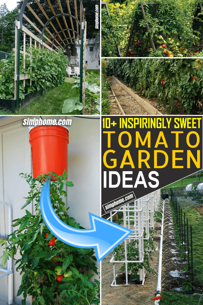 Simphome.com 10 tomato garden ideas Featured Pinterest Image