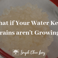What if Your Water Kefir Grains Aren't Growing?