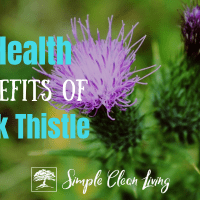 7 Health Benefits of Milk Thistle