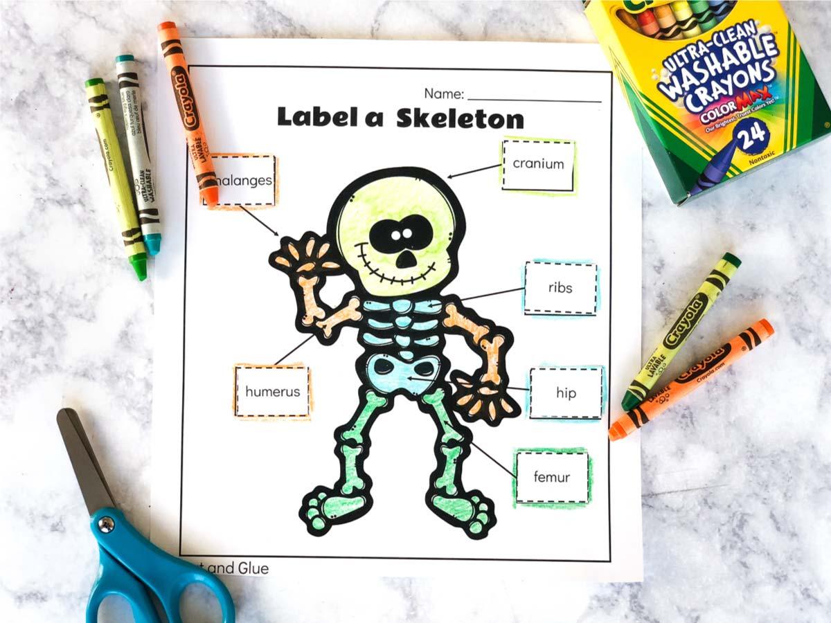 Free Printable Label A Skeleton Worksheet For Kids