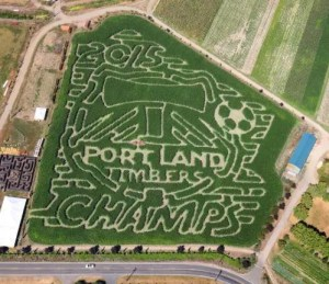 The corn maze at Bella Organic Pumpkin patch in NW Portland