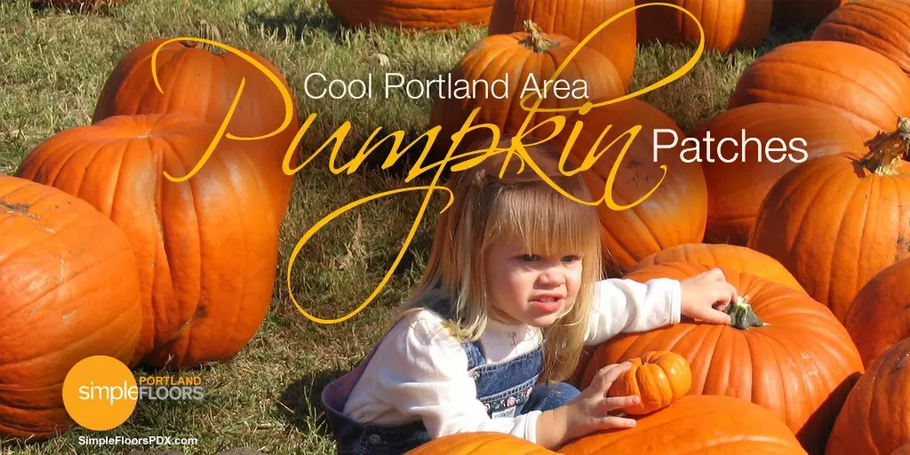 the best pumpkin patches around Portland