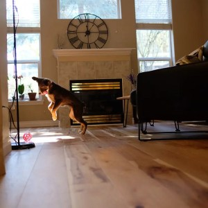 Actual Install - Monarch Plank Storia II Hickory Engineered Wood Floor