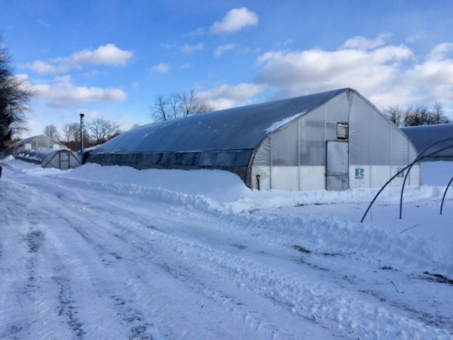 Crop roundup for this cold, cold winter!