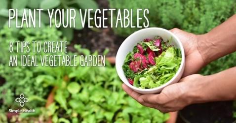 Plant Your Vegetables