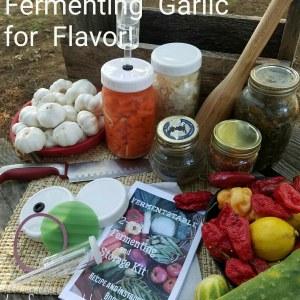 ferment
