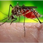 Dengue Fever -Symptoms, Diagnosis, Treatment and Prevention