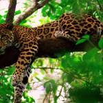 Belize ? Central Americas Marine Paradise