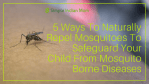 5 Ways To Naturally Get Rid Of Mosquitoes
