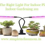 Using The Right Light For Indoor Plants – Indoor Gardening 101