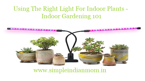 Using The Right Light For Indoor Plants - Indoor Gardening 101