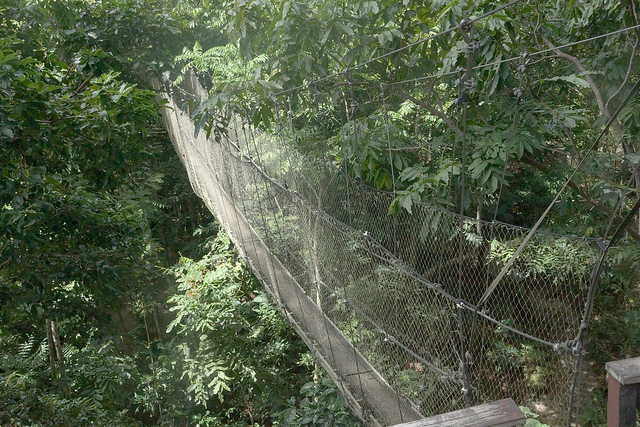 Walk the jungle canopy & The Spirit Of Samoa - Simple Luxe Living