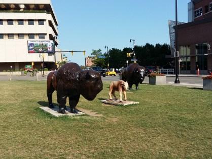 quoi faire à Buffalo
