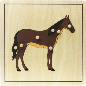 Puzzles Zoologie: Cheval