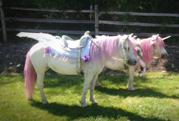 Rent Unicorn Ponies For Birthday Parties Simplemost