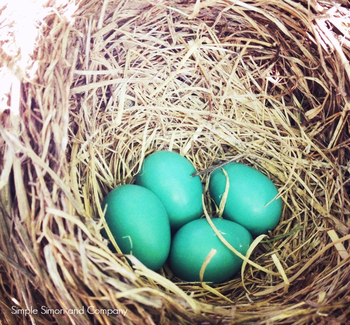 the art of homemaking---building a nest