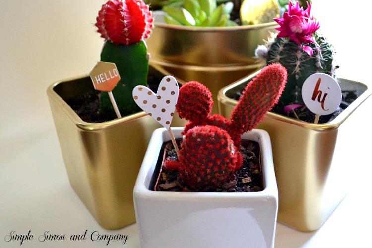 Cactus Picks Collection